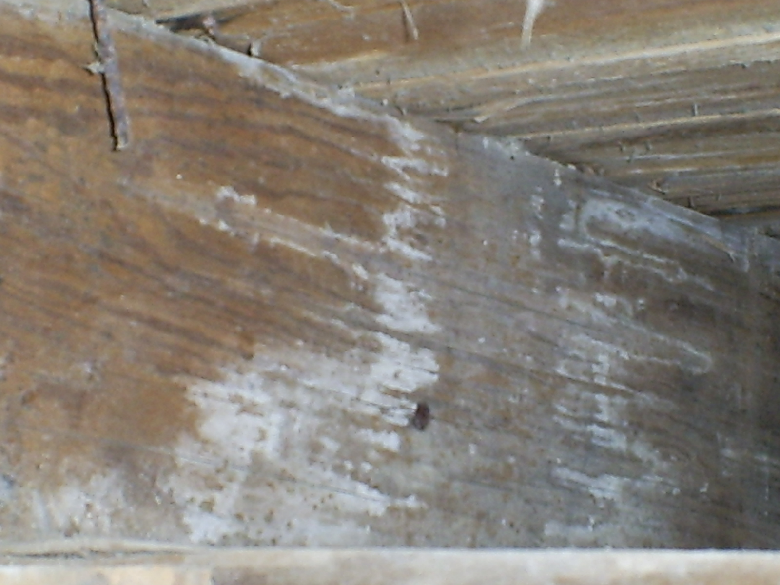 Museum Building Infested With Mold The Douglas Fairbanks